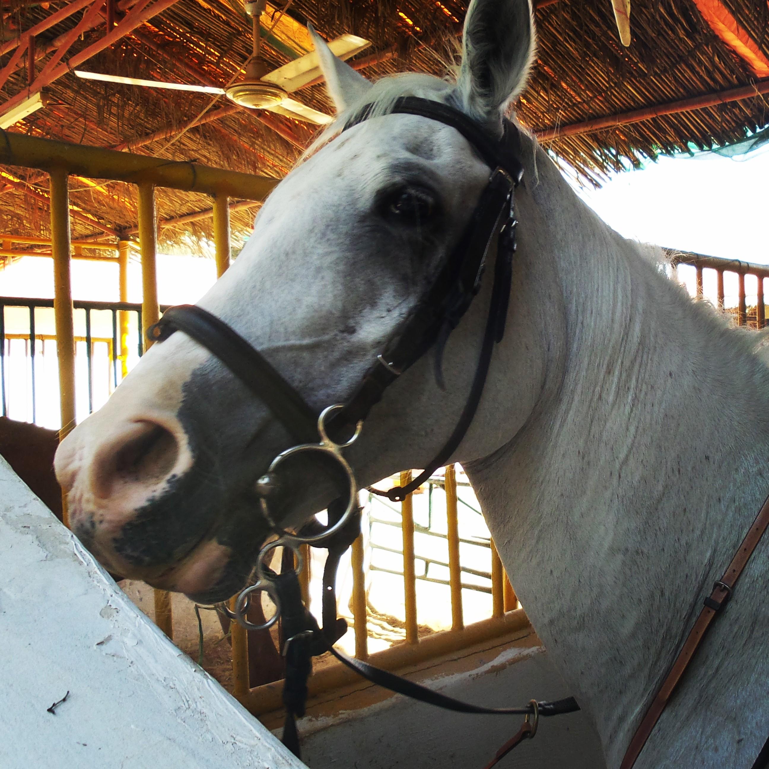 Thursday s weekly roundup horse riding saudi more for Where to go horseback riding near me